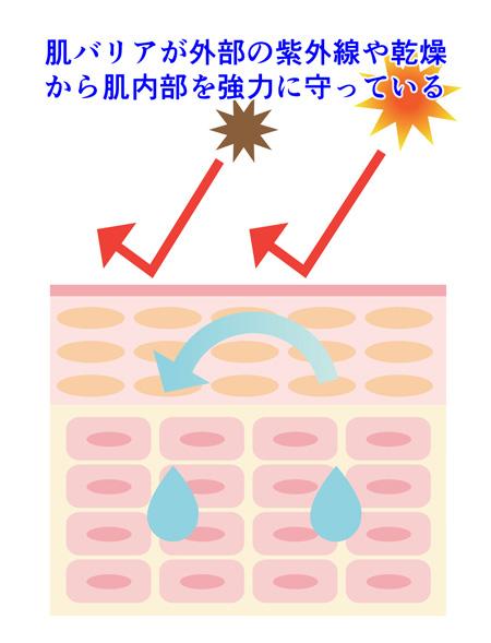 肌のバリア機能の説明画像