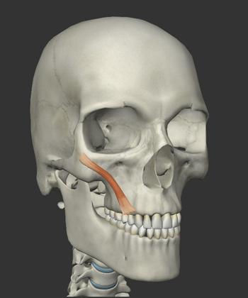 小頬骨筋の画像