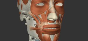 表情筋の画像