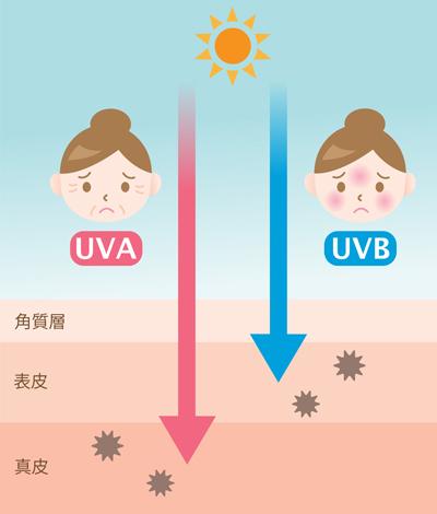 顔のたるみを引き起こす紫外線のイメージ画像