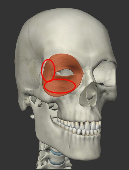 眼輪筋の鍛え方の画像