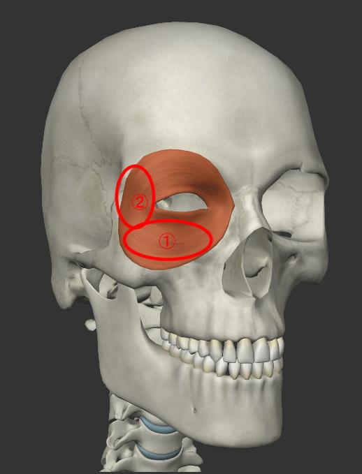 眼輪筋を鍛える解説画像