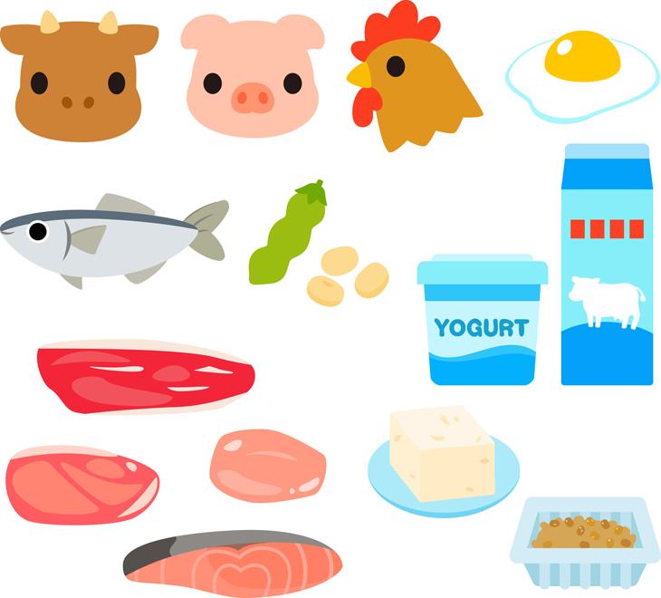 タンパク質を多く含む食品の画像