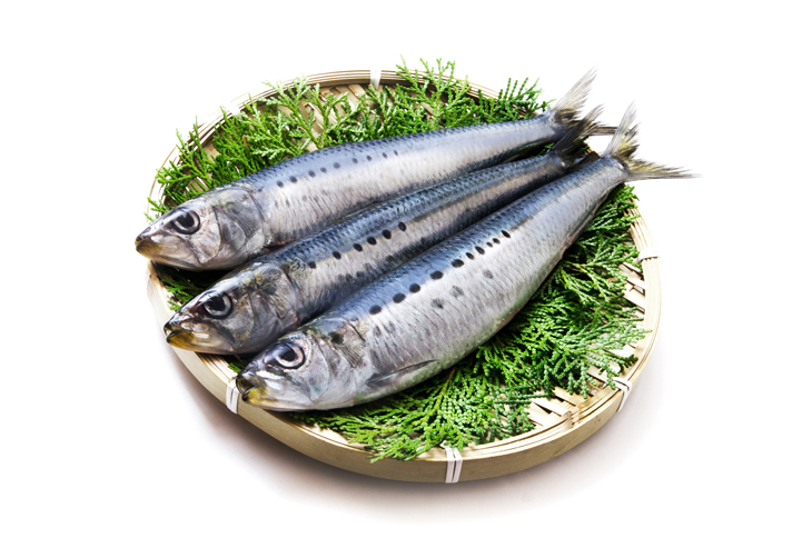 青魚(いわし)の画像
