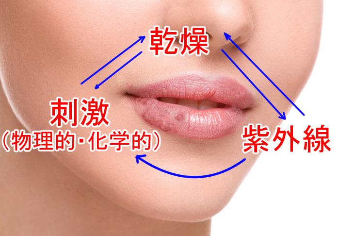 唇のしわの原因の解説画像