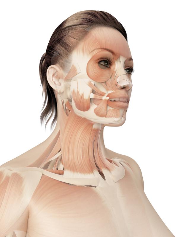 顎周りの筋肉の画像