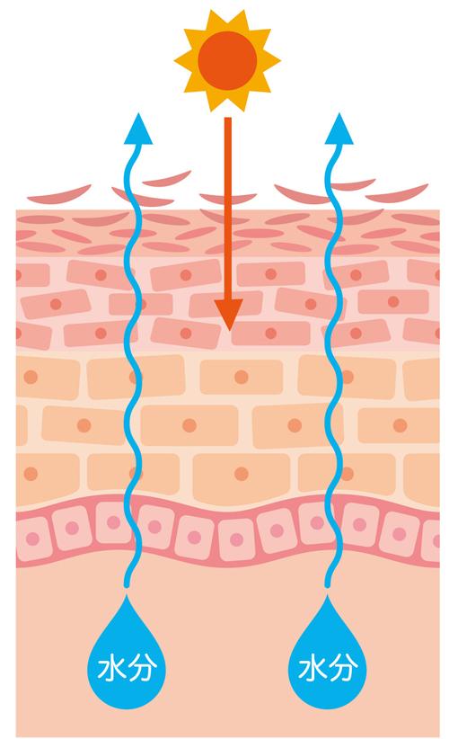 乾燥肌が理由で紫外線にも弱くなっているイメージ画像