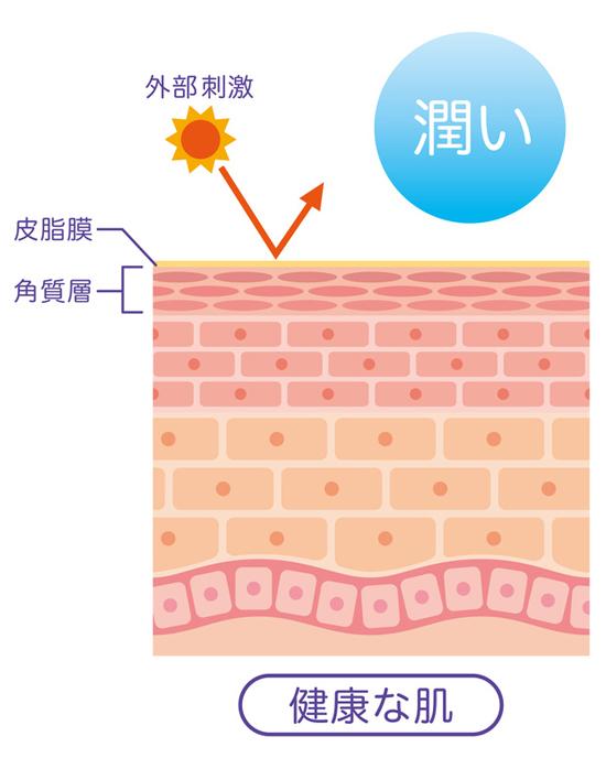 肌が潤っている状態の説明画像